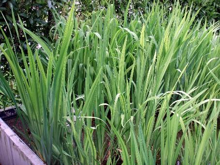 Abbildung pflanzenfilter